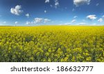 Canola  Rapeseed Crops Field...