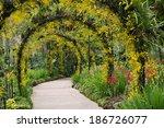 Botanic Gardens  Orchid Garden
