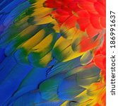 scarlet macaw feathers ... | Shutterstock . vector #186991637