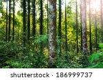 Tropical Primary Forest In...