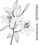 flower lily sketch.  flourish... | Shutterstock . vector #187032563