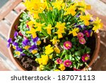 Colorful Spring Plant...