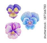pink purple violet blue pansy... | Shutterstock . vector #187166783
