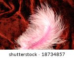 Pink Tenderness   Feather On...