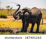 Elephant Mud Splash On African...