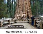 general sherman tree  world's... | Shutterstock . vector #1876645