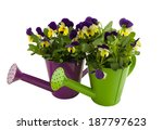 two colorful watering cans with ... | Shutterstock . vector #187797623