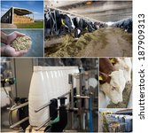collage of dairy industry... | Shutterstock . vector #187909313