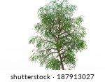 tree   Shutterstock . vector #187913027