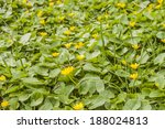 photo of spring flowers in the... | Shutterstock . vector #188024813