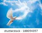 Dove In The Air With Wings Wid...