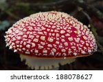 Detail Of A Red Hat Mushroom...