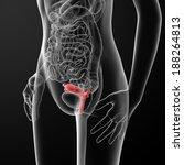 Постер, плакат: Female Reproductive System