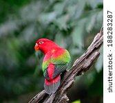 beautiful red parrot ... | Shutterstock . vector #188283287
