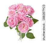 pink roses bunch isolated on... | Shutterstock . vector #188307923