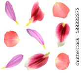 Stock photo set of assorted flower petals rose chrysanthemum and lily 188332373