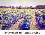 young vineyard in southern... | Shutterstock . vector #188369357