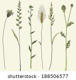 Coastal Grasses  Vector Drawin...