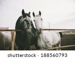 Two Cute Black And White Horse...