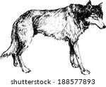 hand drawn wolf   Shutterstock .eps vector #188577893