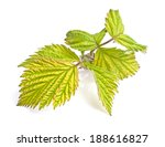 leaves isolated on a white... | Shutterstock . vector #188616827