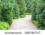 A Winding Path Among Evergreen...