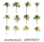 12 of coconut trees on white... | Shutterstock . vector #189078257