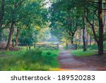 path with fence in a forest in... | Shutterstock . vector #189520283