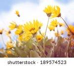 a bunch of pretty balsamroot... | Shutterstock . vector #189574523