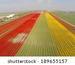 Aerial View On The Tulip Field...