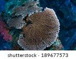 Small photo of Beautiful Hard Coral (Acropora cytherea) in Green Island, Taiwan.