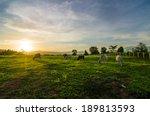 Farm Cow On Sunrise