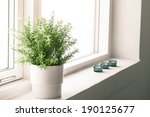 indoor plant in a bathroom... | Shutterstock . vector #190125677