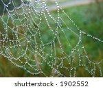 spiderweb | Shutterstock . vector #1902552