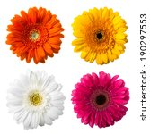 multicolored flowers | Shutterstock . vector #190297553