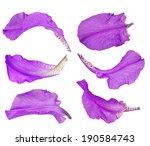 collection of purple iris petal ... | Shutterstock . vector #190584743