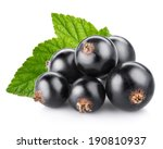 Black Currant Berry Isolated O...