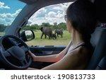 Woman On Safari Car Vacation I...