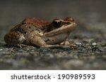 frog | Shutterstock . vector #190989593
