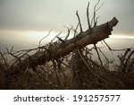 Fallen Tree With A Evening...