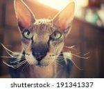portrait of beautiful peterbald ... | Shutterstock . vector #191341337