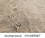 Dog Paw Prints In The Sand.
