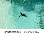 penguin in an aquarium | Shutterstock . vector #191496467