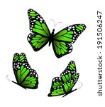 Three Butterflies In Green...