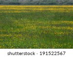 meadow with tall buttercup ... | Shutterstock . vector #191522567