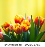 Red Tulips With Yellow...
