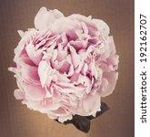 Flower Design  On Black Vintag...