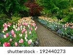 Garden Landscape In Spring ...