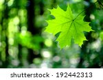 Forest Trees Leaf. Nature Gree...