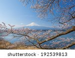 fuji and cherry blossom on lake ... | Shutterstock . vector #192539813